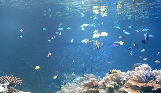 【兵庫県】32年続いてる須磨水族館がリニューアルへ。